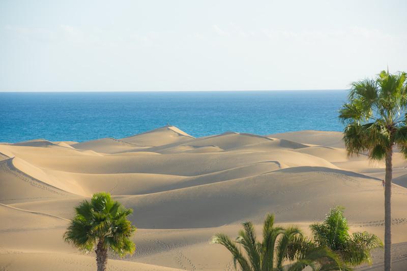 im Vordergrund Palmen und Sanddünen. Im Hintergrund das Meer.