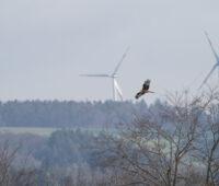 Rotmilan vor Windrad. Windenergie, Vogelschutz, Naturschutz