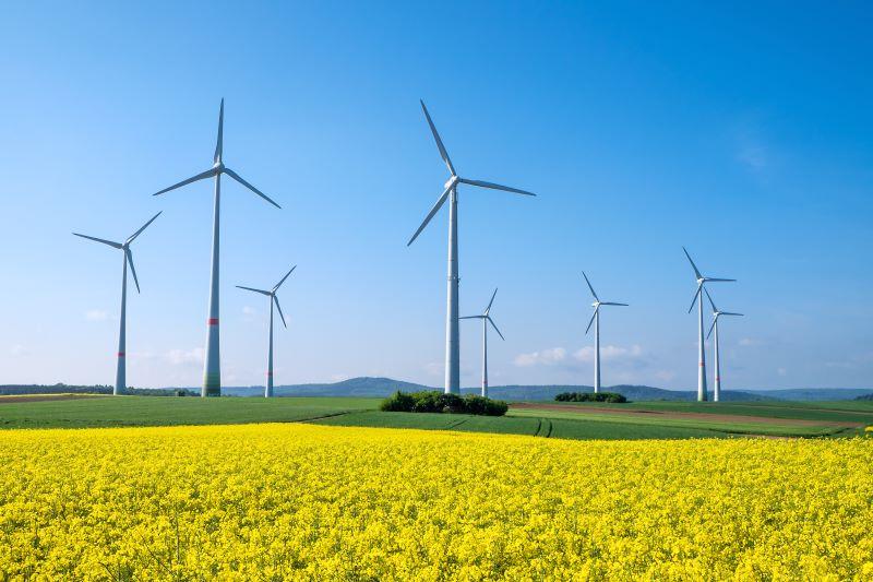 Windenergieanlagen und Rapsfelder vor blauem Himmel.