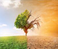 Zu sehen ist ein zur Hälfte grüner Baum, dessen andere Hälfte verdorrt ist, als Symbol für den 6. Bericht des Weltklimarates IPCC.