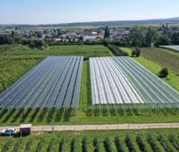 Luftaufnahme von Agri-PV-Anlage über Obstbau-Feld in grüner Landschaft vor blauem Himmel
