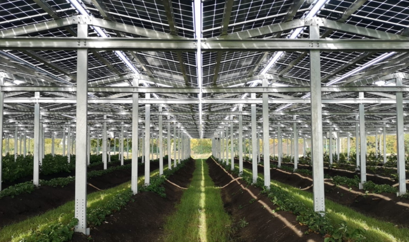 Ein solar bedachtes Gewächshaus lässt Licht für Grünpflanzen durch.