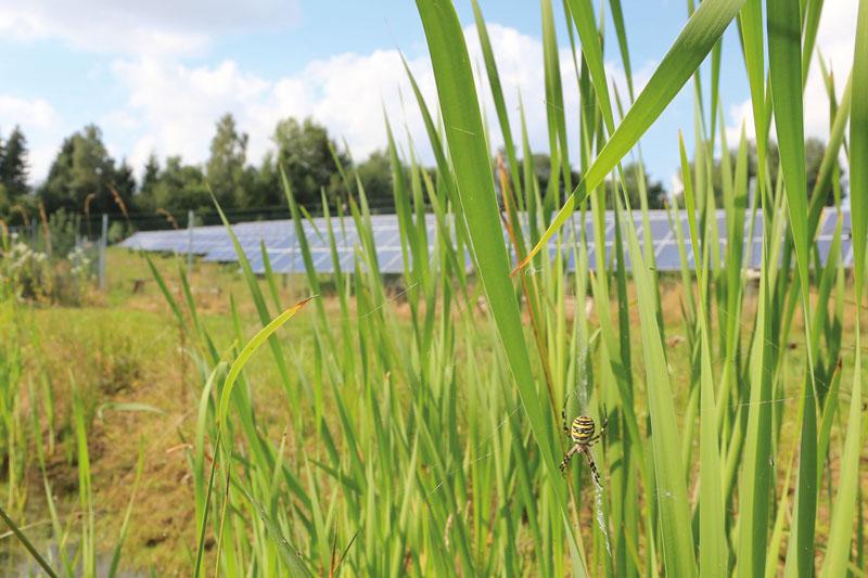 Gelbe Spinne vor Solarpark