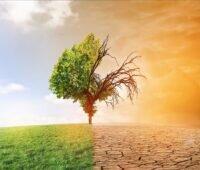 Zu sehen ist eine grüne Baumhälfte links und eine vertrocknete Baumhälfte rechts als Symbol für die Aufgabe der Klimaschutz-Unternehmen.