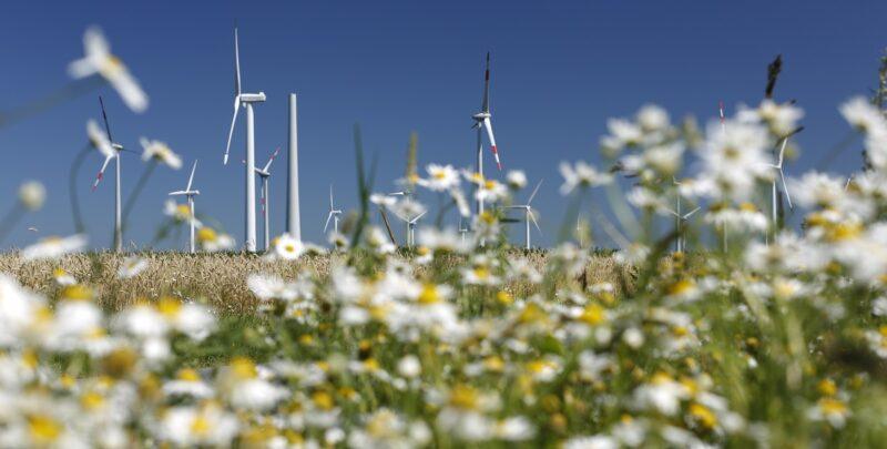 Zu sehen sind Windenergieanlagen in einer Blumenwiese: Das Windenergie-Repowering-Projekt Holßel im Landkreis Cuxhaven.
