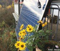 Balkon-Solaranlage hinter gelben Blumen
