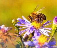Kampagnenplakat zeigt eine Biene auf einer bunten Blüte.
