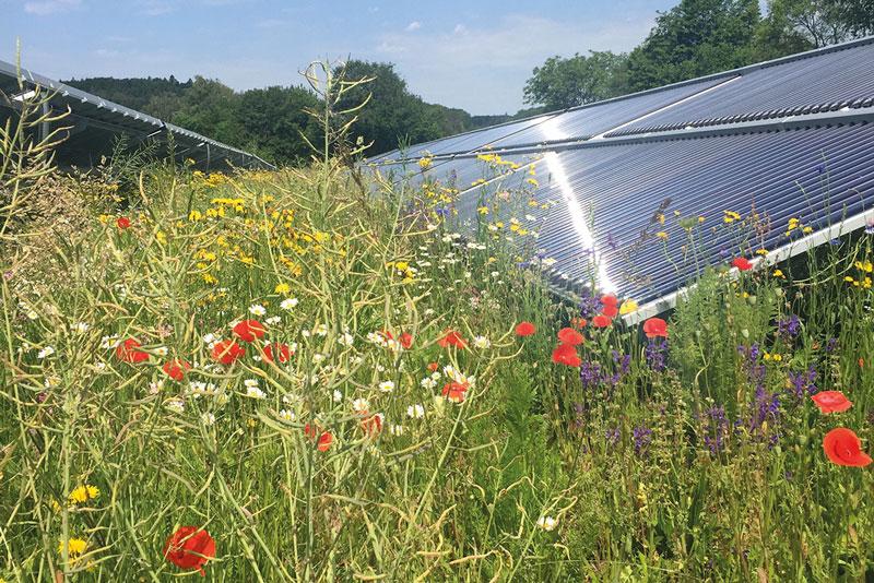 Blütenmeer zwischen Solarthermie-Kollektoren