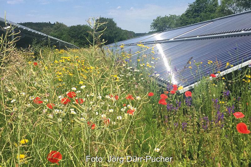 solarparks gewinn f r die biodiversit t solarserver. Black Bedroom Furniture Sets. Home Design Ideas