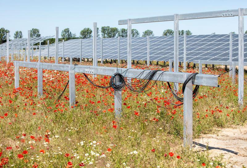 Solaranlage im Freiflächenbau auf trockenem Gras und Mohnblumen