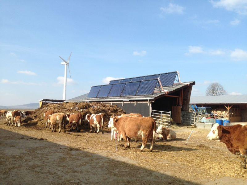 Solarthermiekollektoren auf einem landwirtschaftlichen Stall, an dem eine Herde Kühe vorbeiziehen.
