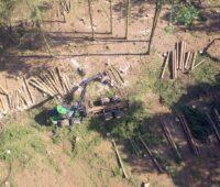 ZU sehen ist ein Harvester, der im Wald Bäume fällt. Das Schadholz eigent sich gut als Energielieferant.