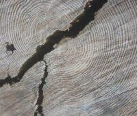 Schnitt durch ein Stück Holz mit Jahresringen und Rissen - Biomasse für die Energiewende