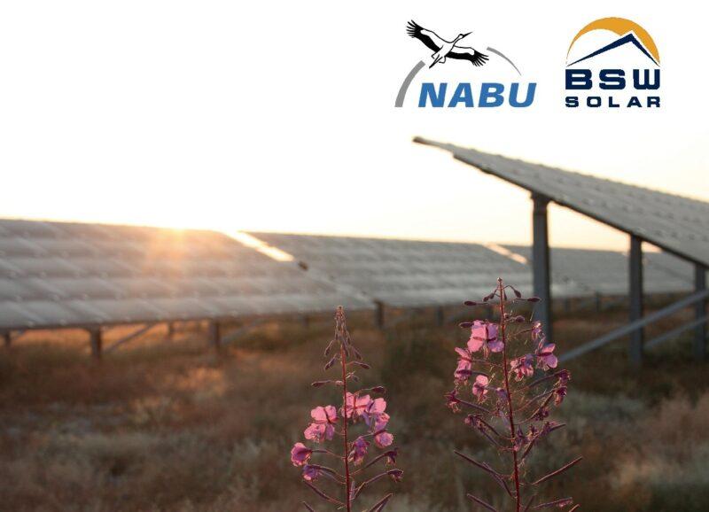 Zu sehen ist ein Ausschnitt des Deckblattes des gemeinsamen Papiers von NABU und BSW zu Kriterien für naturverträgliche Photovoltaik-Freiflächenanlagen.