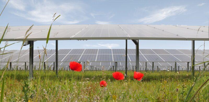 Zu sehen ist eine Freiflächen-Photovoltaik-Anlage. Solche Anlagen sind durch die Novelle des Raumordnungsgesetzes gefährdet, was den Photovoltaik-Ausbau in Niederösterreich ausbremsen könnte.
