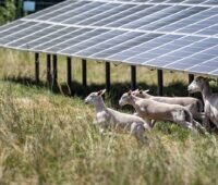 Photovoltaik bei EnBW: Im Bild der Photovoltaik-Solarpark Zwiefaltendorf mit weidenden Schafen.