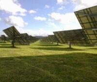 Nachgeführte Solarspiegel auf grüner Wiese.
