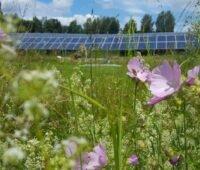 Artenreiche Wiese mit Freiflächen-PV