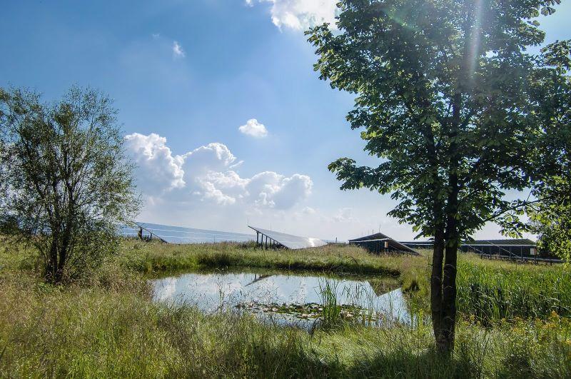 Ein Solarpark in einem Biotop mit Bäumen und Gras unter blauem Himmel.