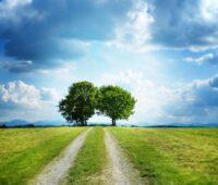 Zu sehen ist ein Feldweg über den zwei kräftige Bäume ragen, ein Landschaftsfoto als Symbol für den Tag der erneuerbaren Energien.