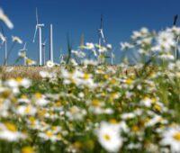 Vor einem Windpark ist unscharf ein Meer von weiß-gelben Blumen zu sehen.