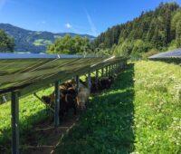 Zu sehen ist ein mit Schafen besetzter Photovoltaik-Solarpark von eco-tec.at. In Zukunft soll Photovoltaik und Blumenwiese kombiniert werden.