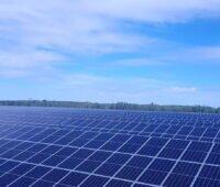 Ein Solarpark mit Bäumen und blauem Himmel.