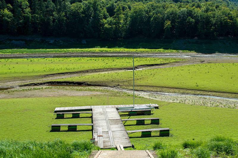 Ein Steg, der auf eine grüne Fläche führt